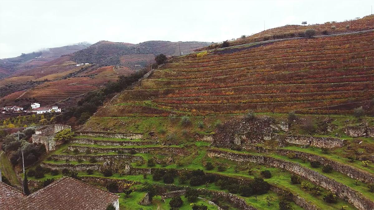 Vista das vinhas da Quinta do Zimbro